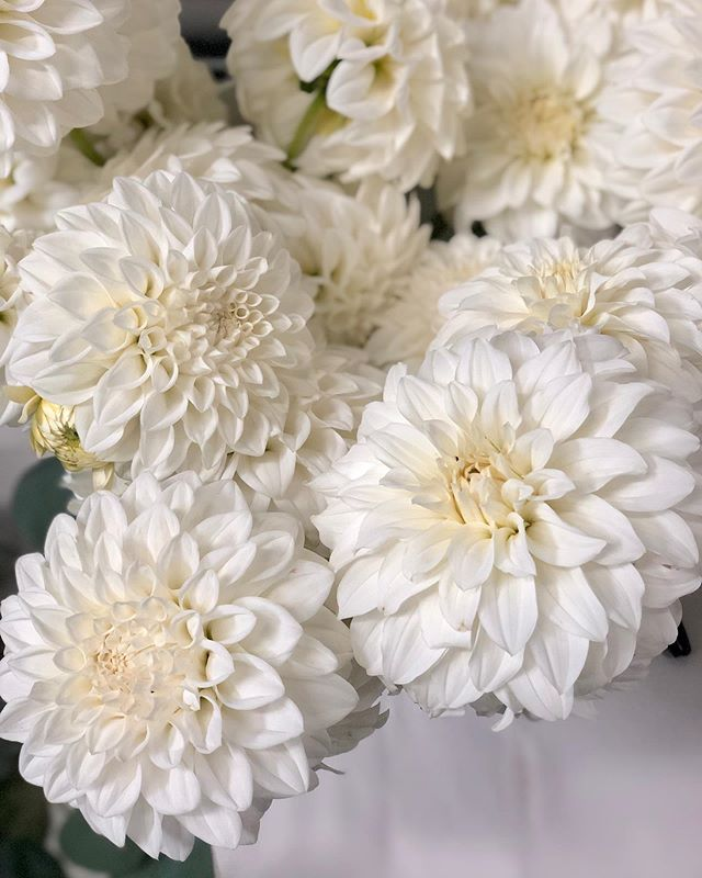 Gorgeous dahlias from @aztec_dahlias via @pointwestwholesaleflowermarket that were used in our weekends weddings. They held up incredibly well even in the heat!
