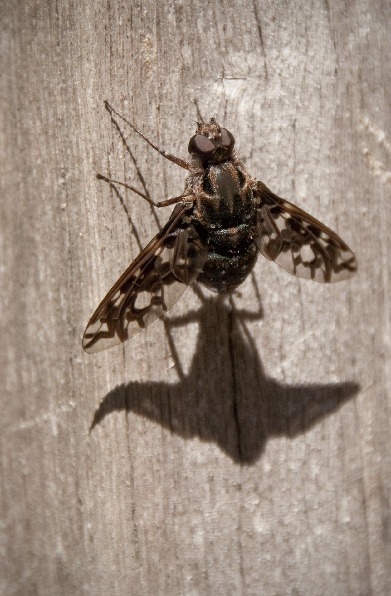 bug shadow