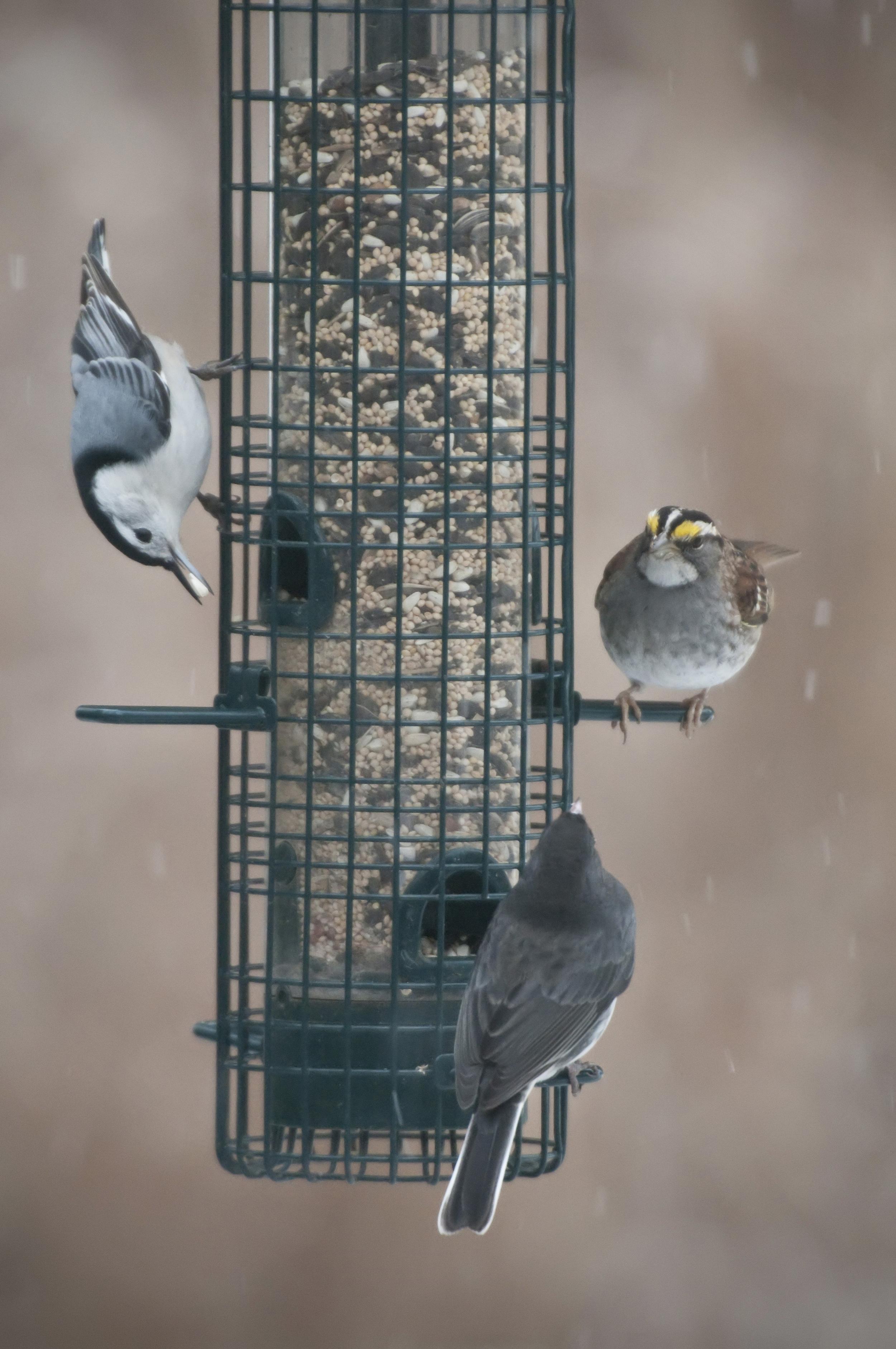crowded feeder