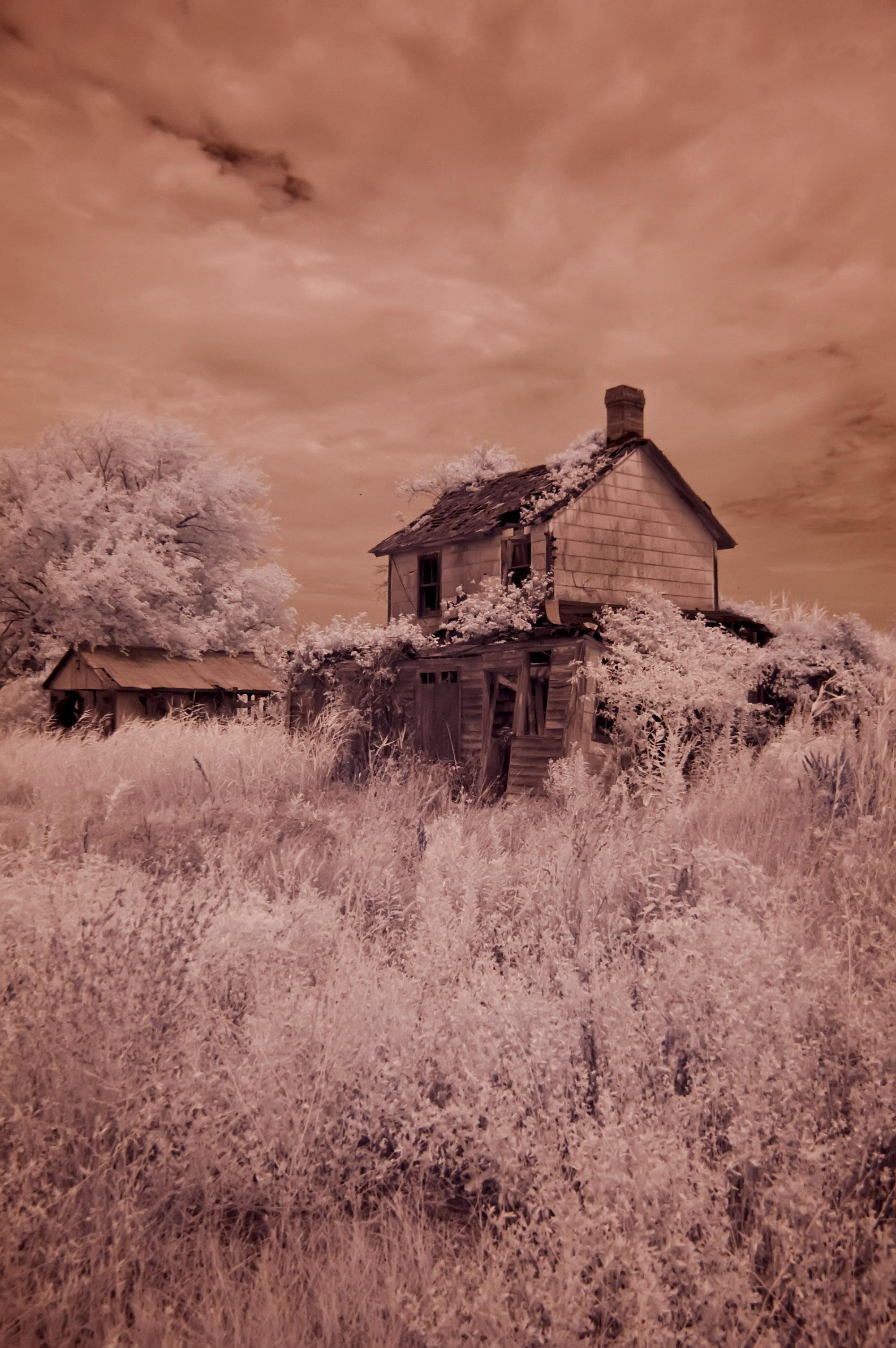 abandoned farm near Cambridge, Md.