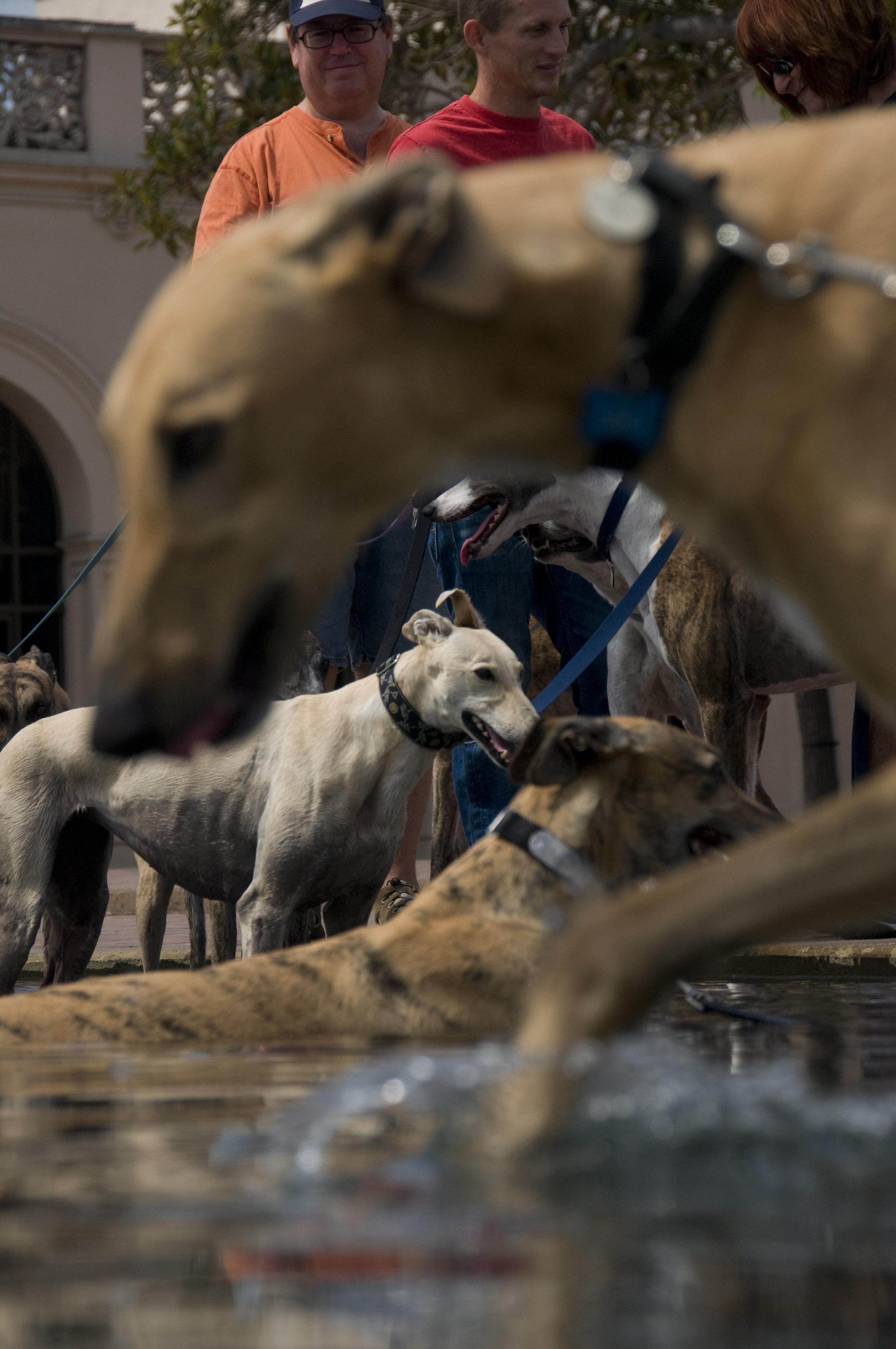 Balboa Park dog meeting