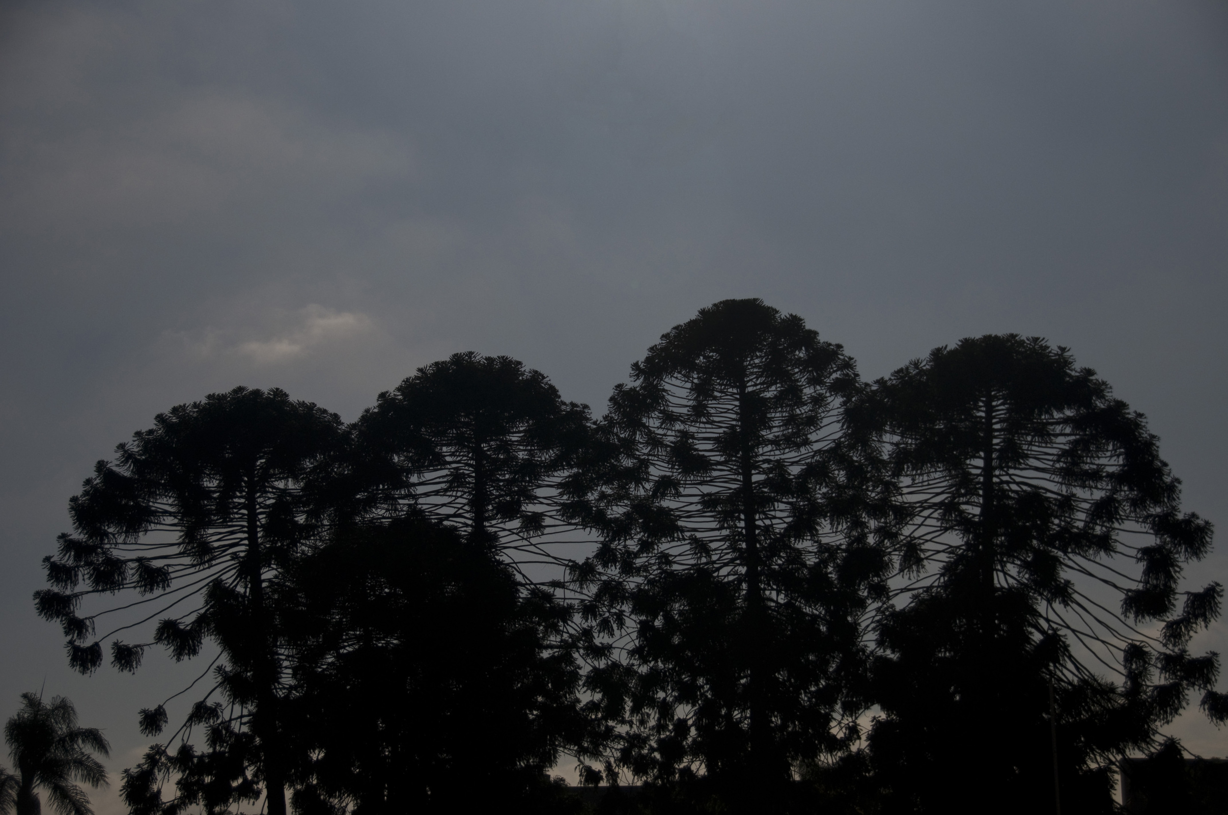 Balboa Park silhouette