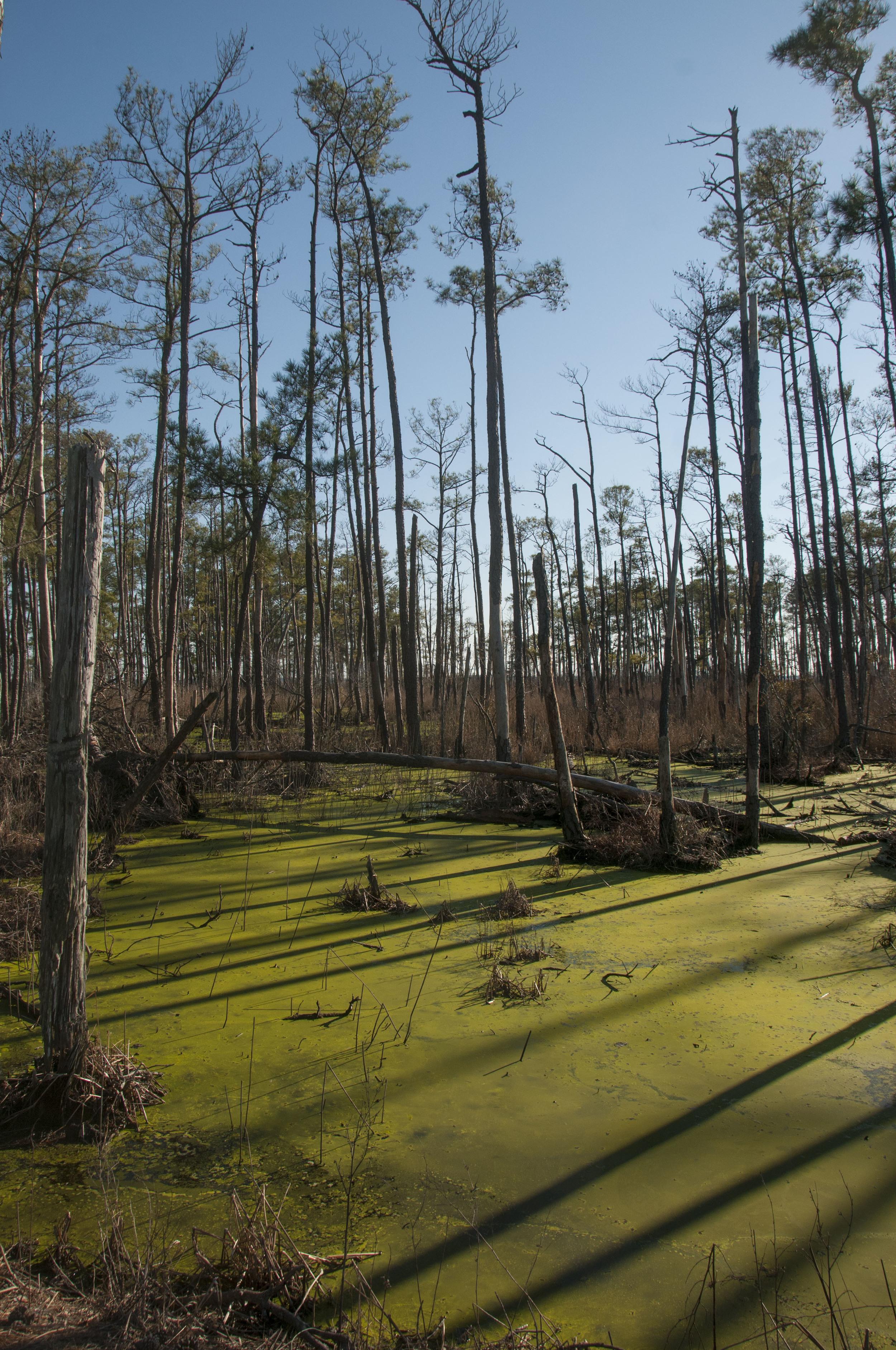 Blackwater bog