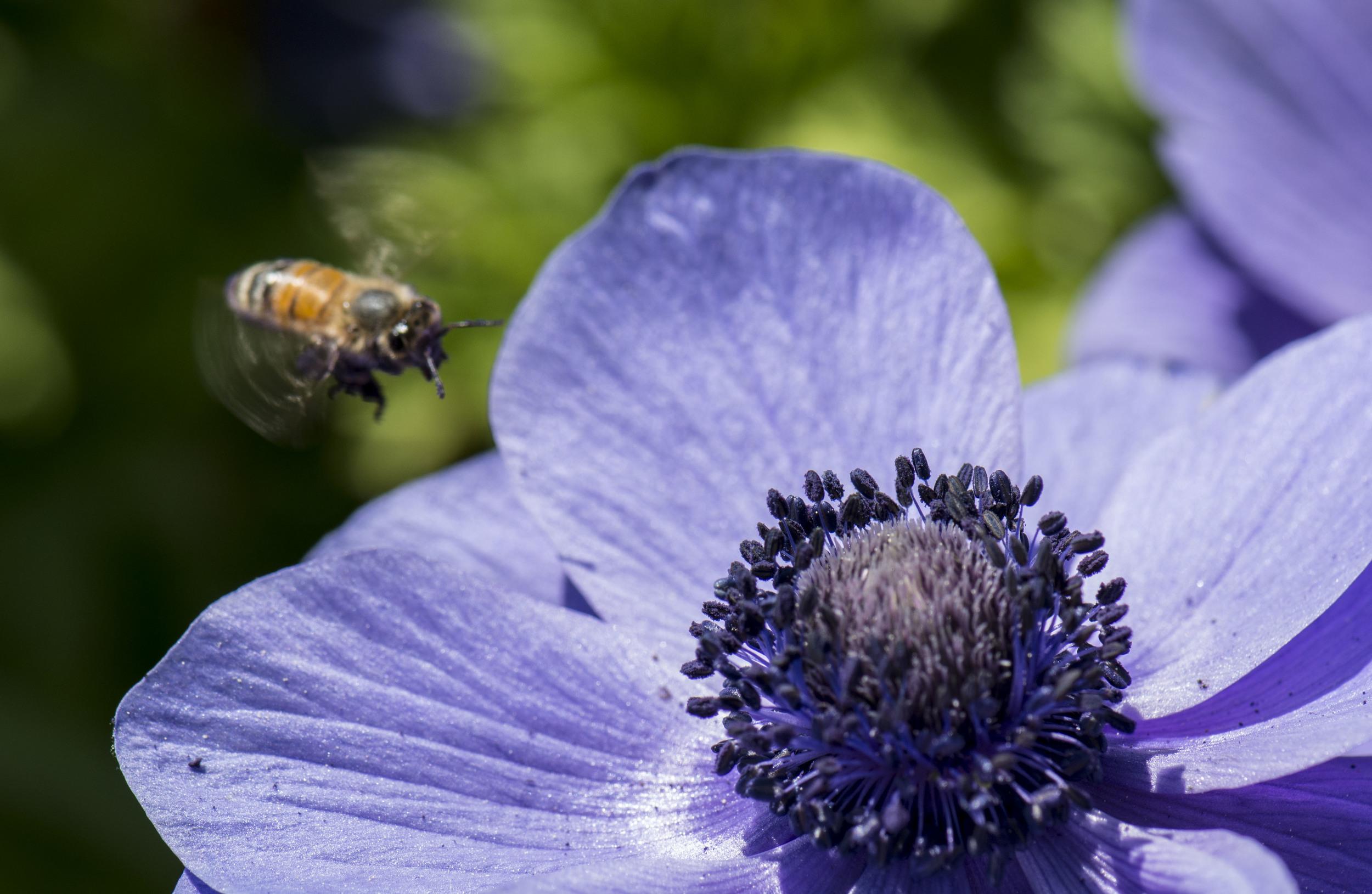 Bee feast