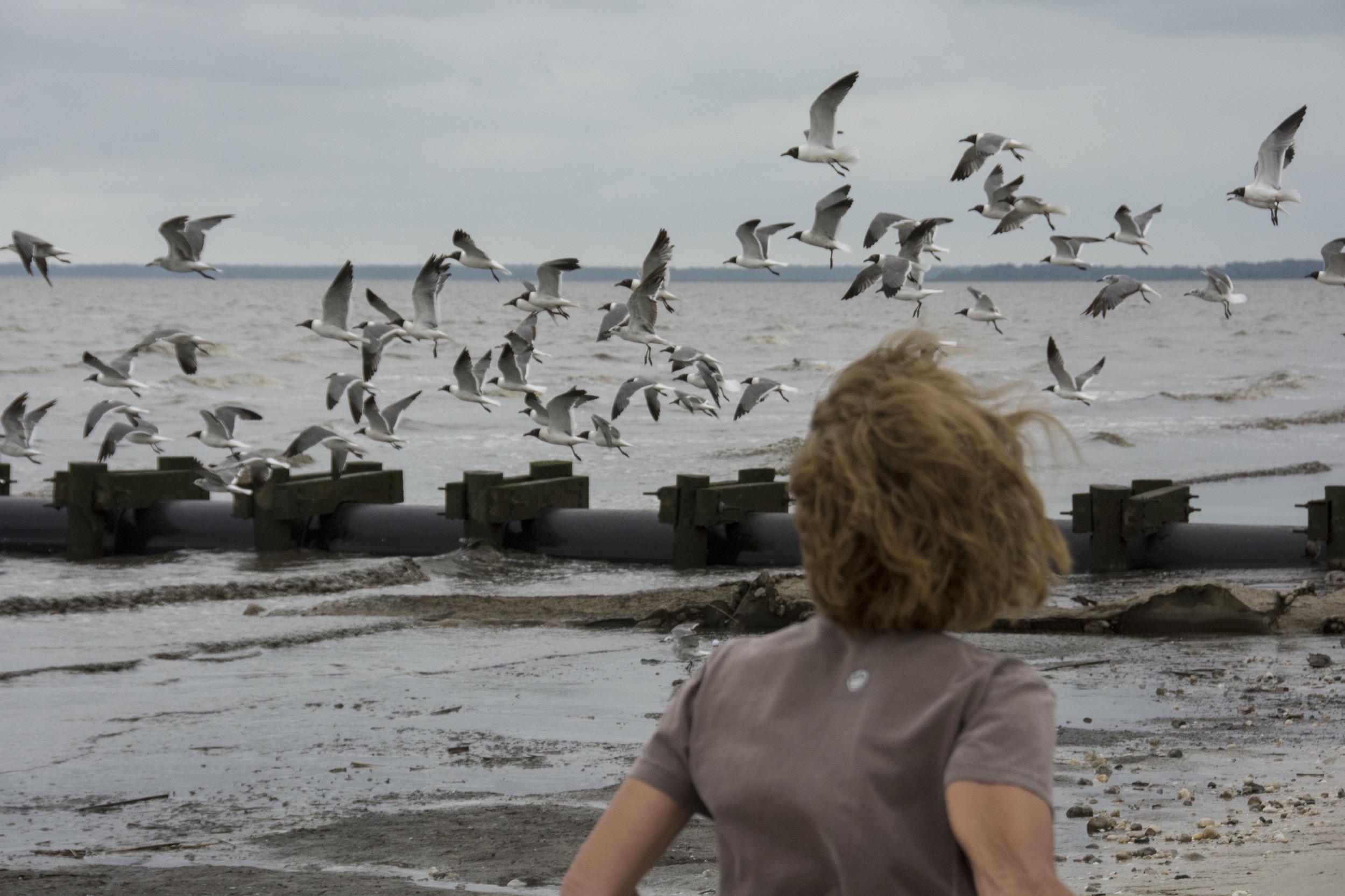 Diane and gulls