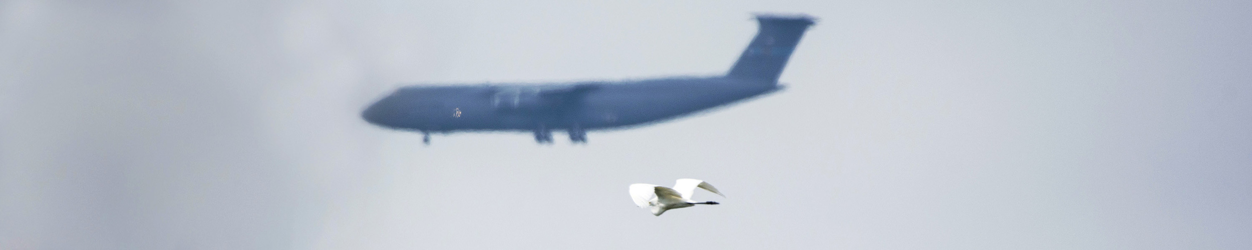 C-5 and Great White Egret