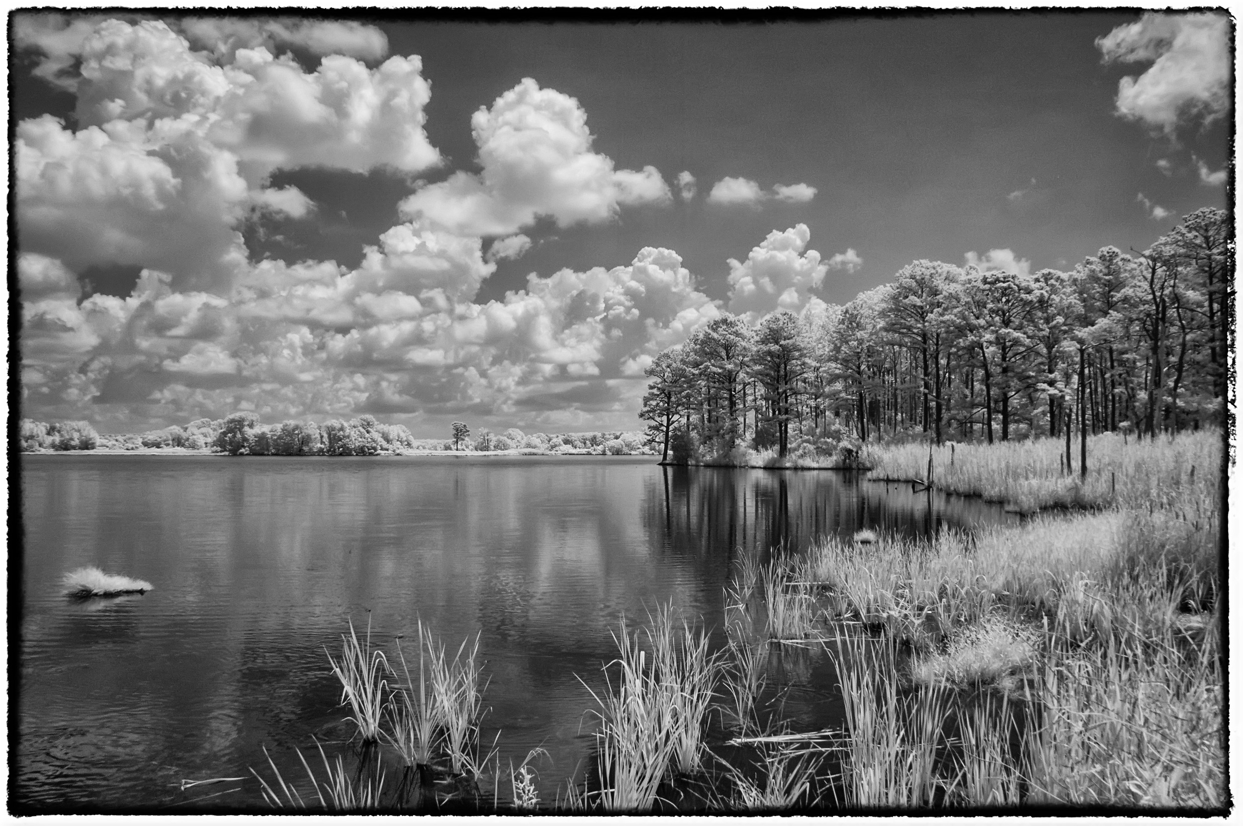 Infrared landscape at Blackwater NWR