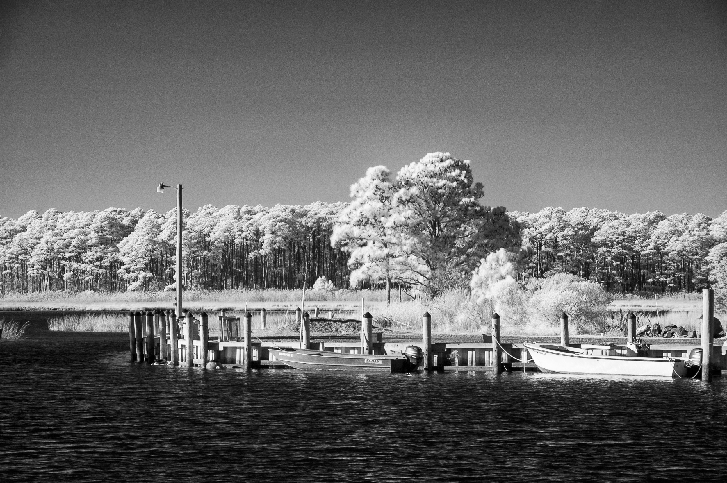 Infrared on Hoopers Island