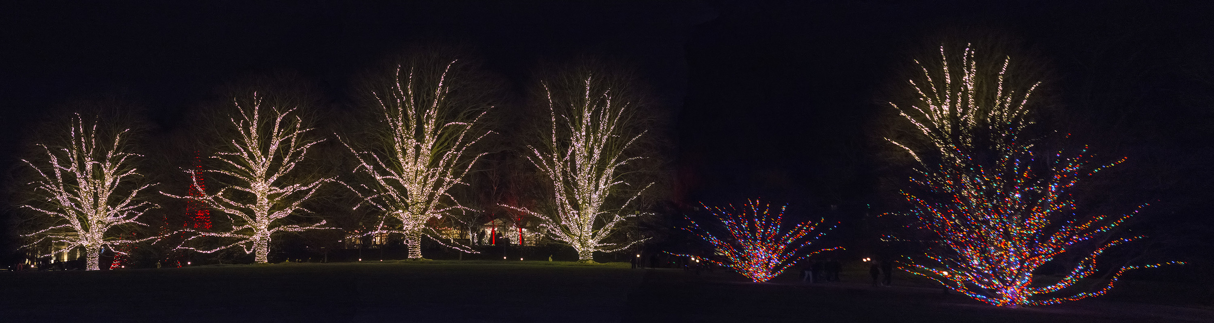 lighted trees at Longwood Gardens
