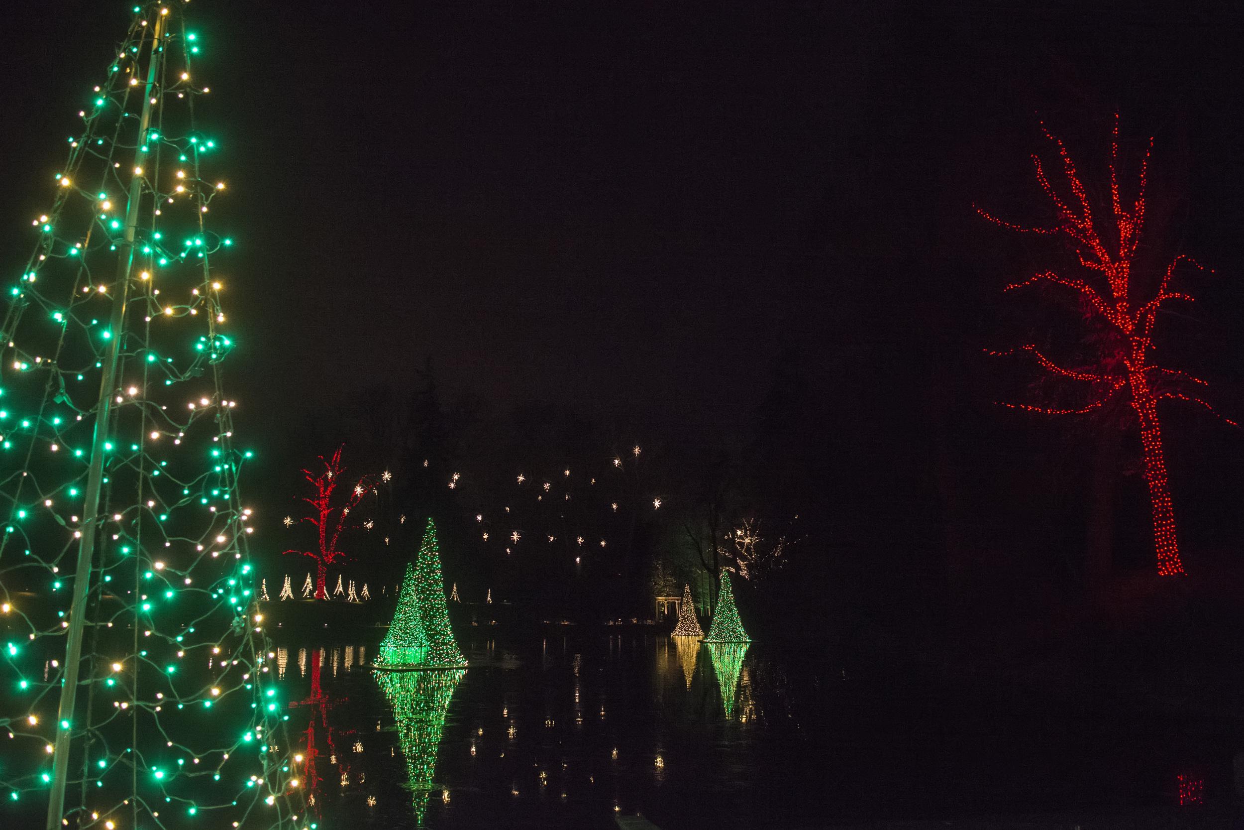 Lakeside tree lights