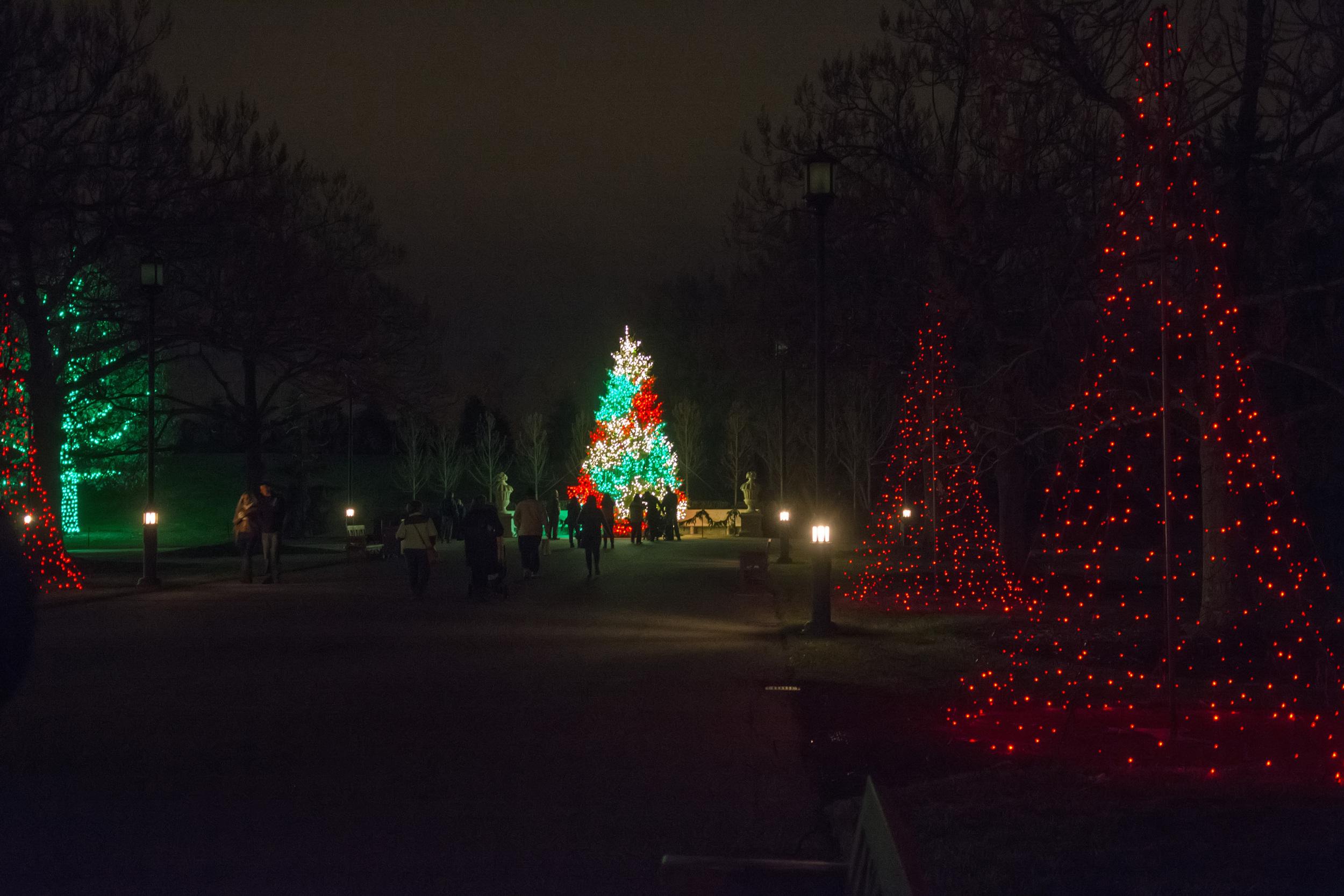 lighted tree walkway