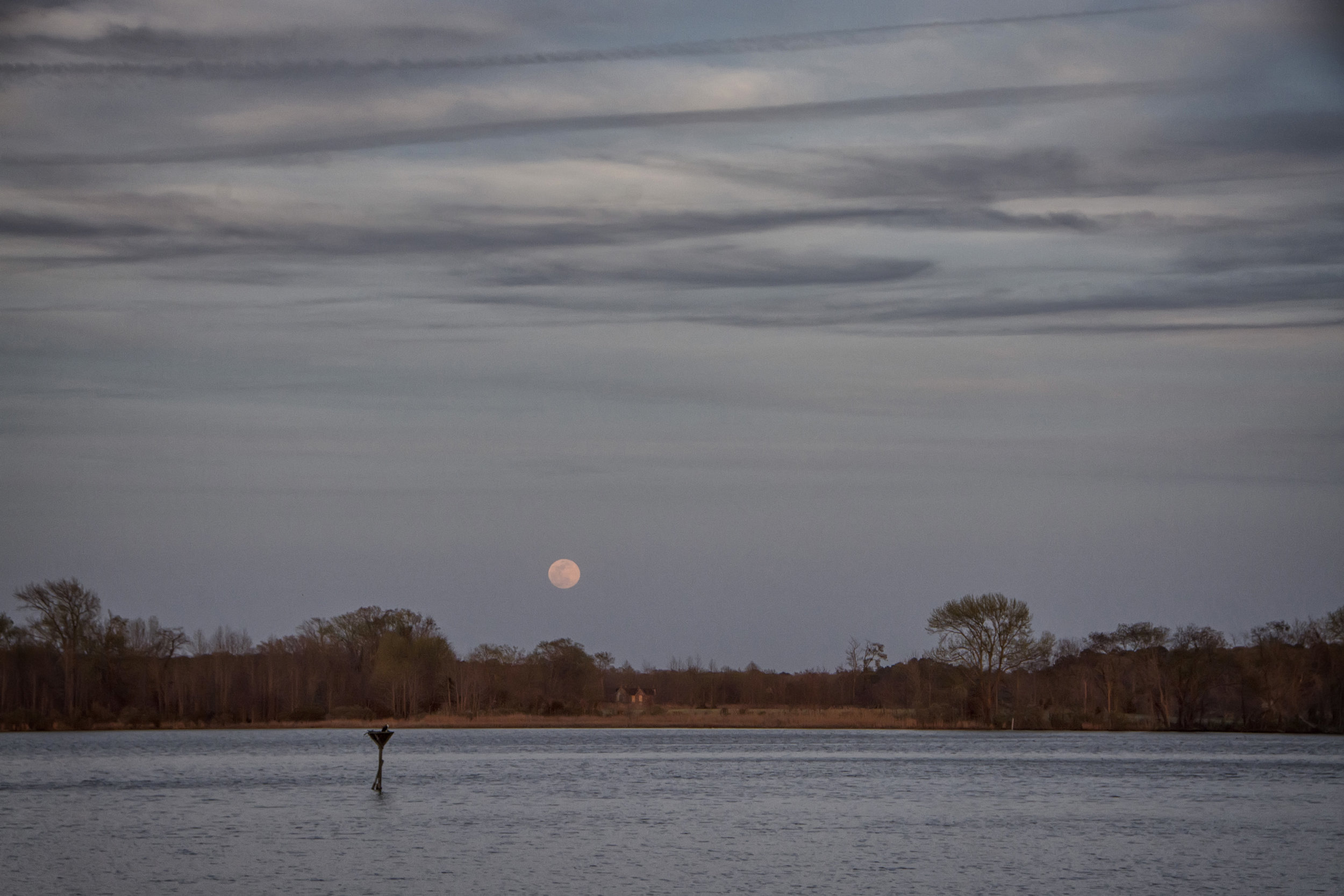 Moonrise Blackwater NWR