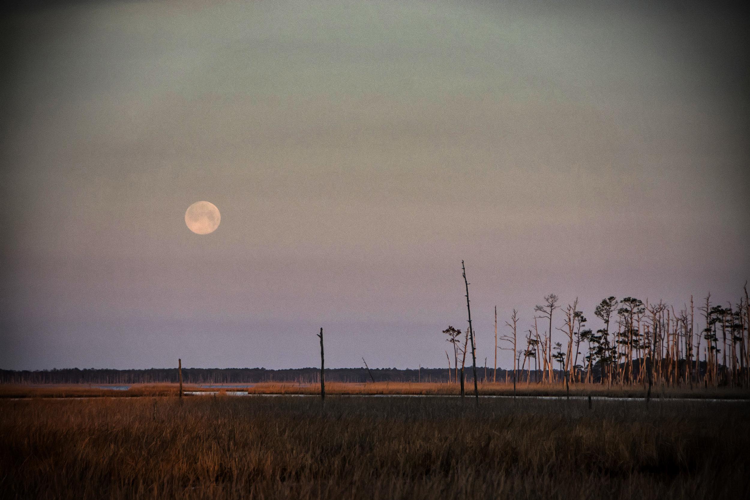Moonset Blackwater NWR