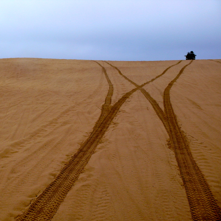 Dune with Forking Paths, Central Coast, California
