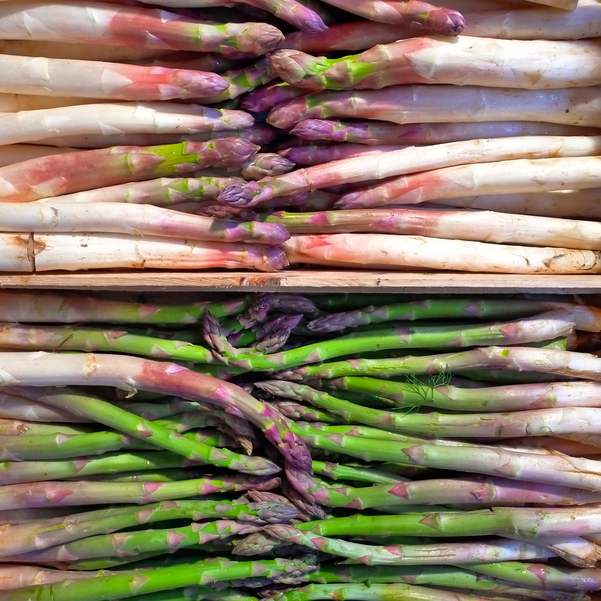 Wild Asparagus at Market, Vence, France