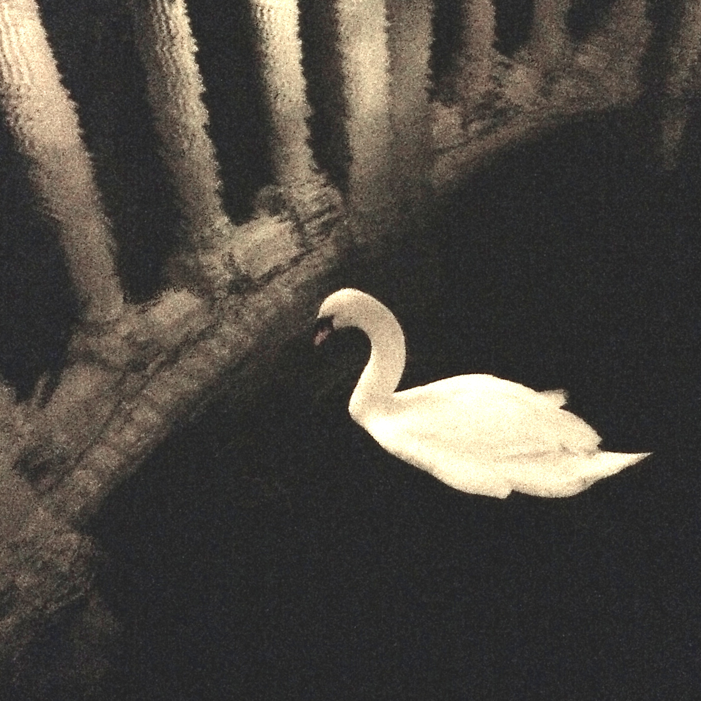 Swan, Palace of Fine Arts (Maybeck