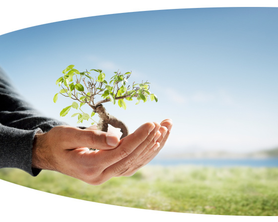 tree_success.jpg