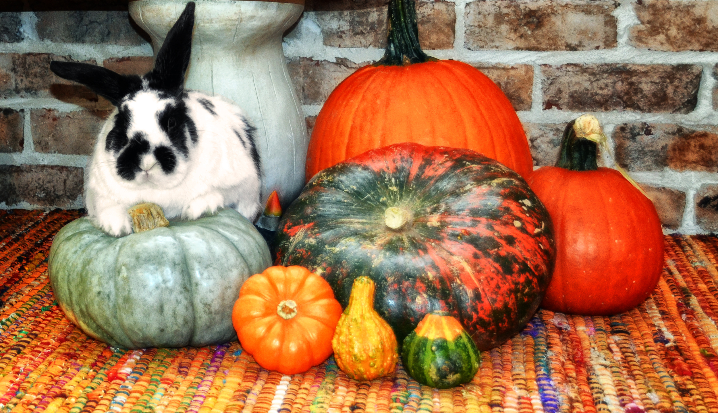 one day I came home to find Narwal kinda riding one of the pumpkins I had for decoration., It ended up being my favorite picture of him.