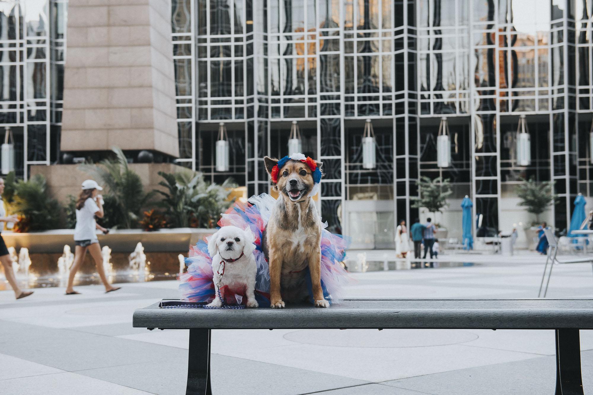 Dogs-ppg007190.JPG