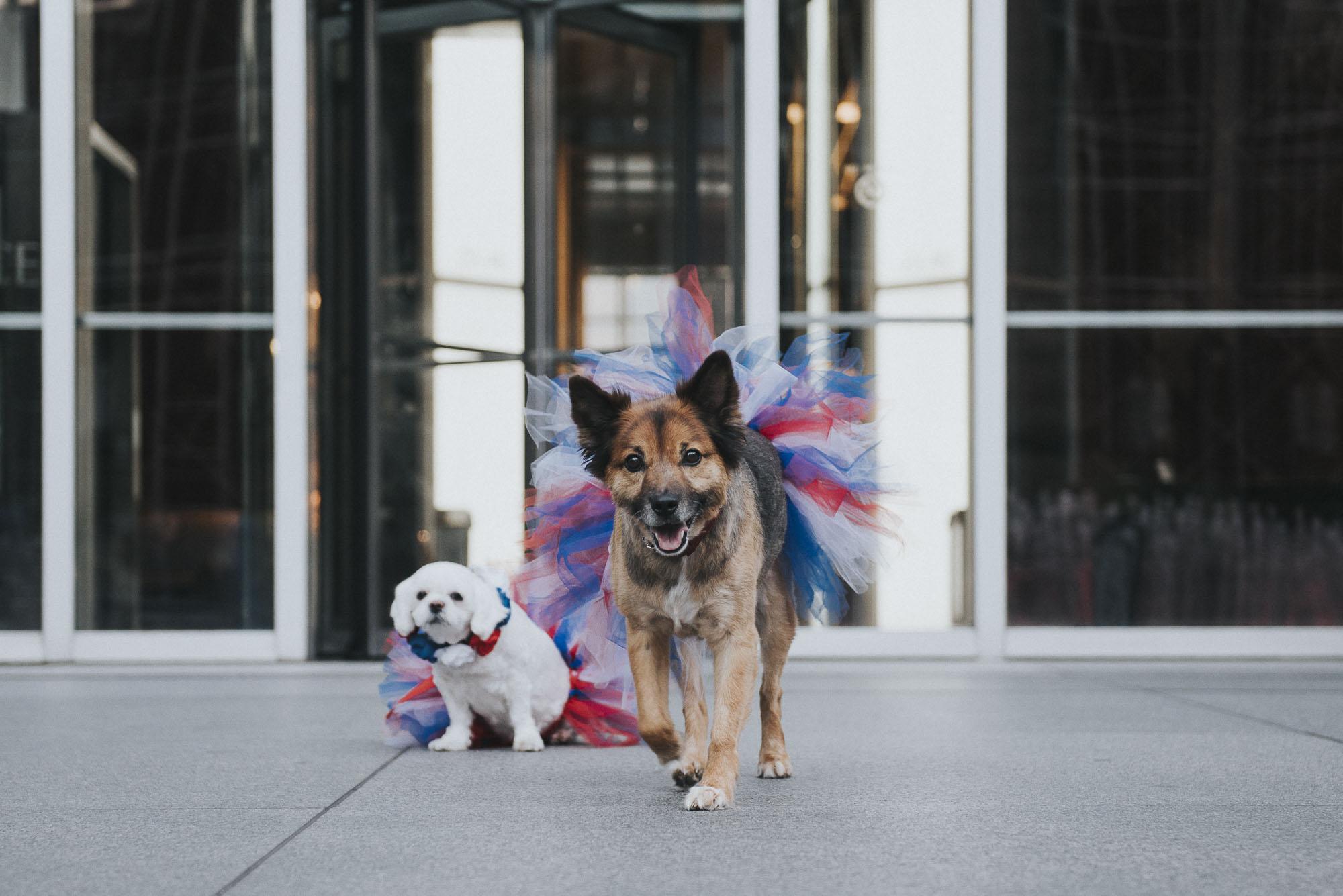 Dogs-ppg070144.JPG