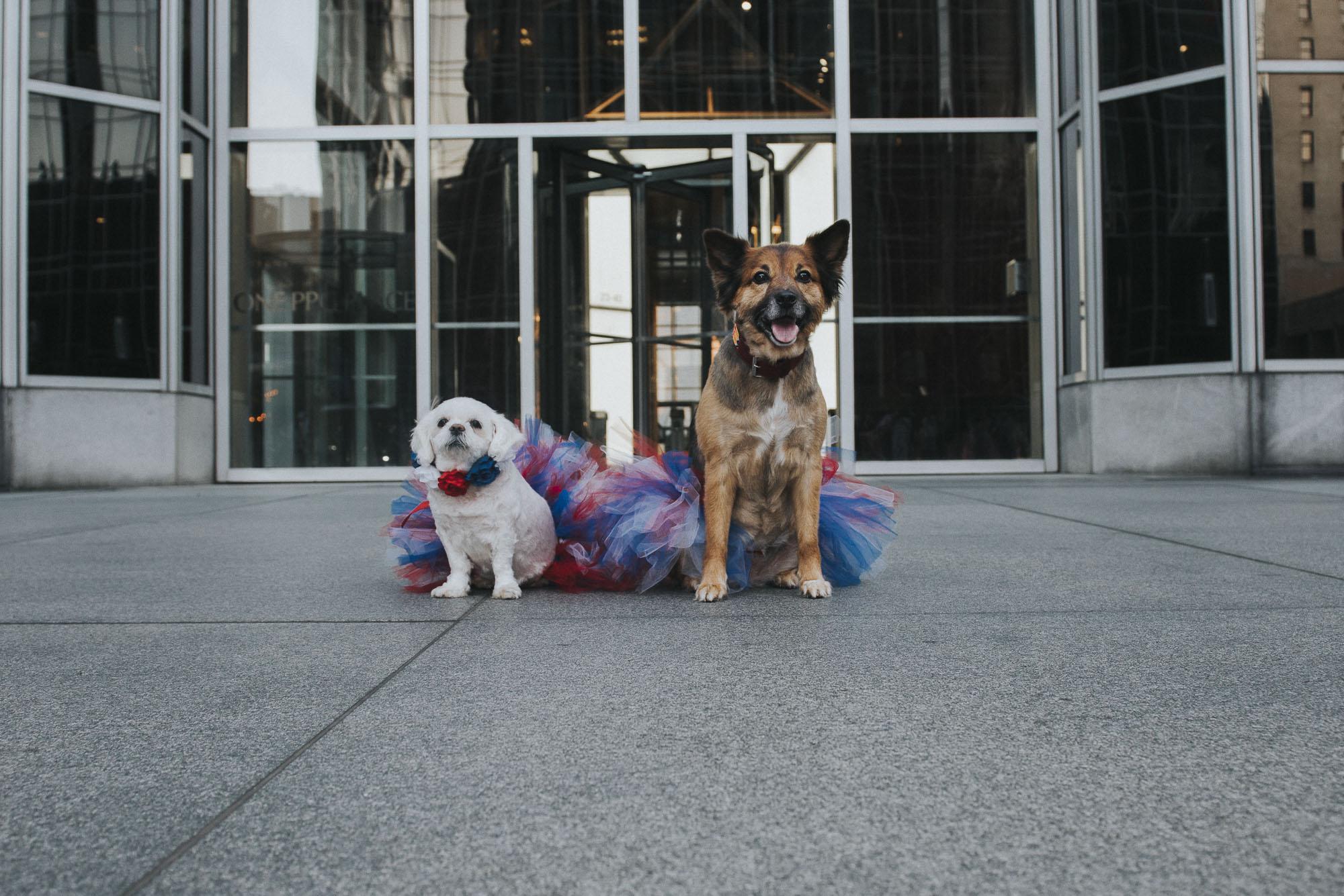 Dogs-ppg077138.JPG