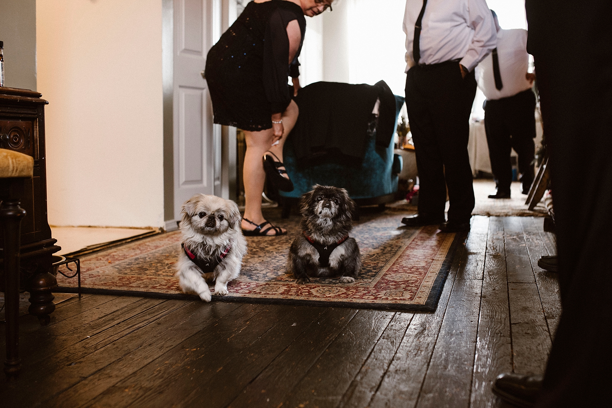 Pittsburgh wedding with dogs