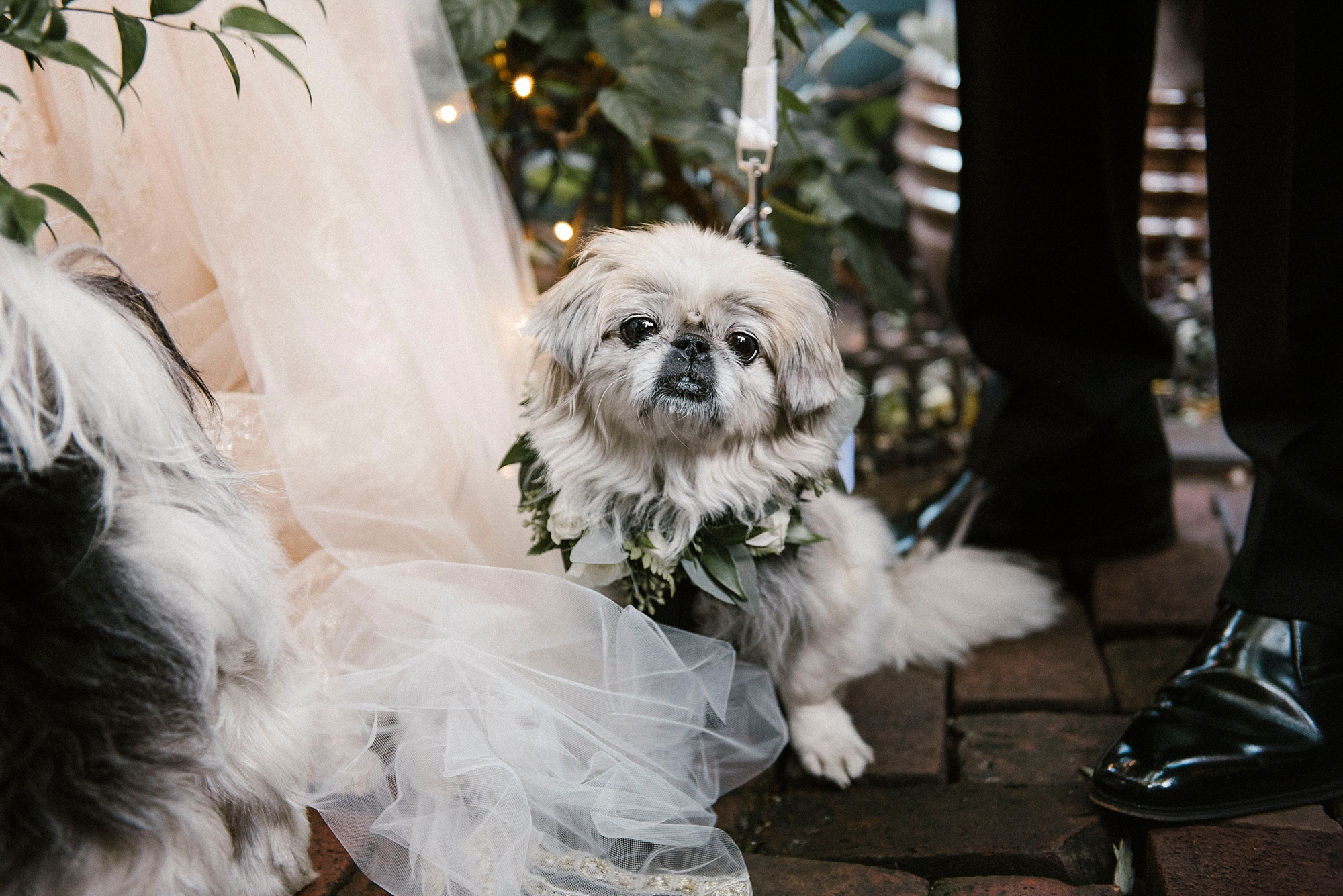 Dog with flower crown wedding