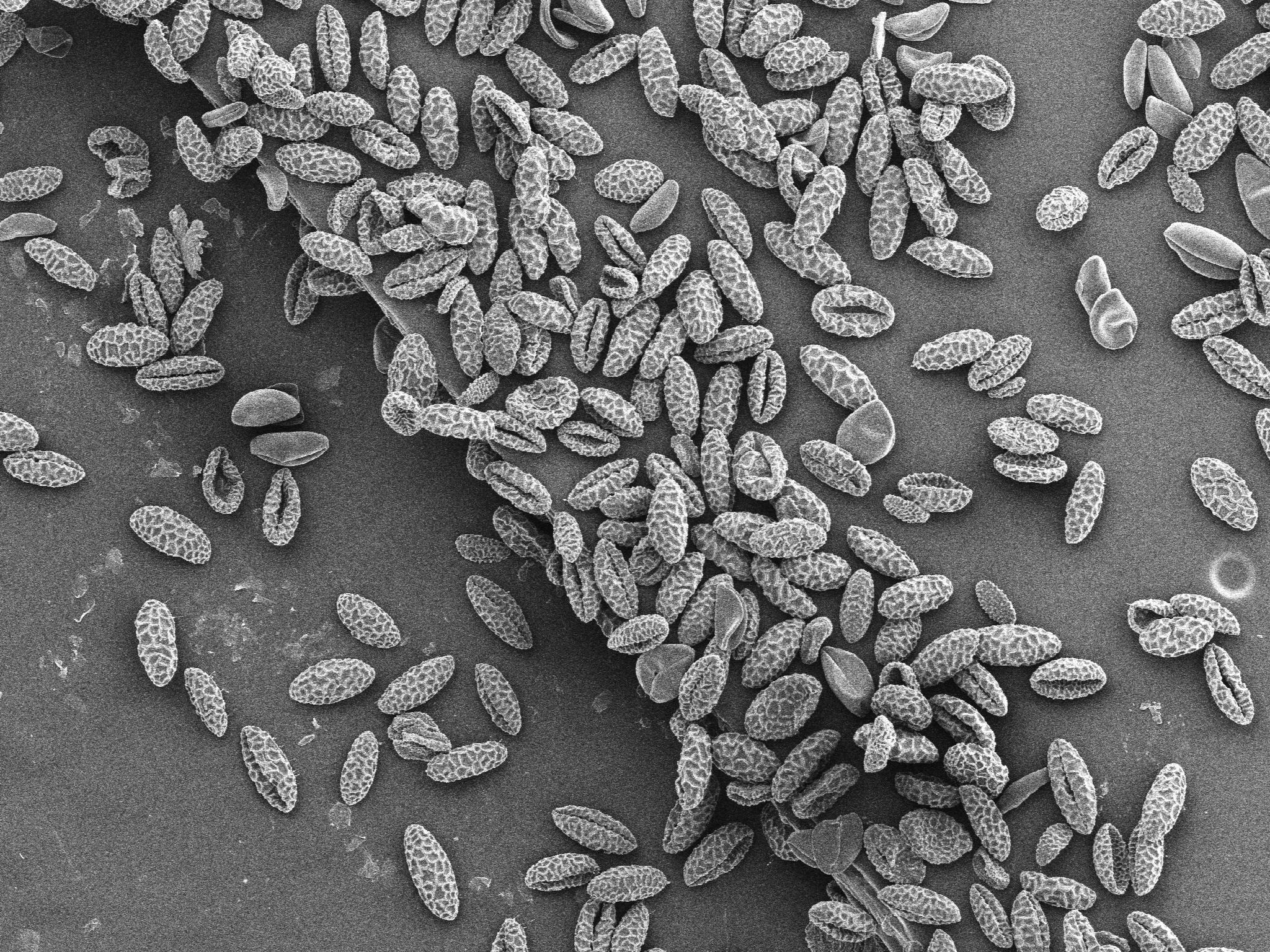 Pollen Sample_5.jpg