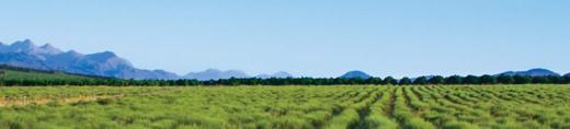 Brakfontein Estate, South Africa