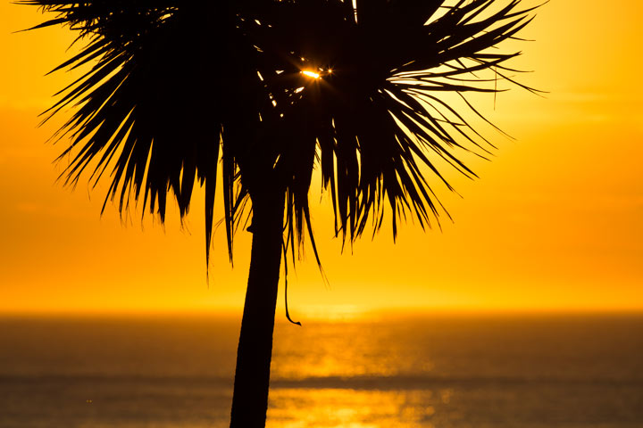 February 09, 2013, 6:54am: Sunshine spilling through ti kouka
