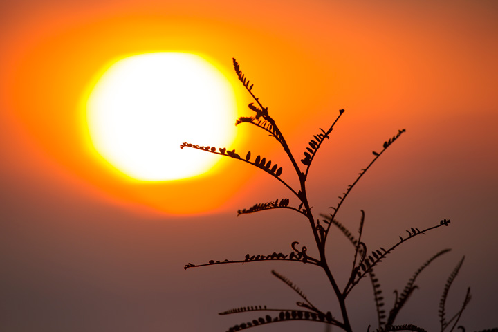 February 9, 2013, 6:42am: New growth on a kowhai straining for the sun
