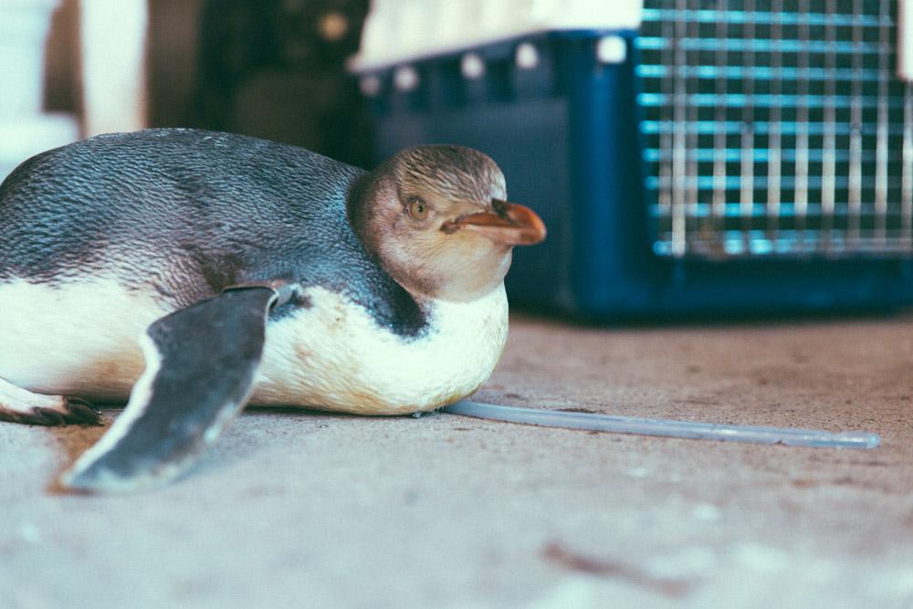 Penguin-Place-10.jpg