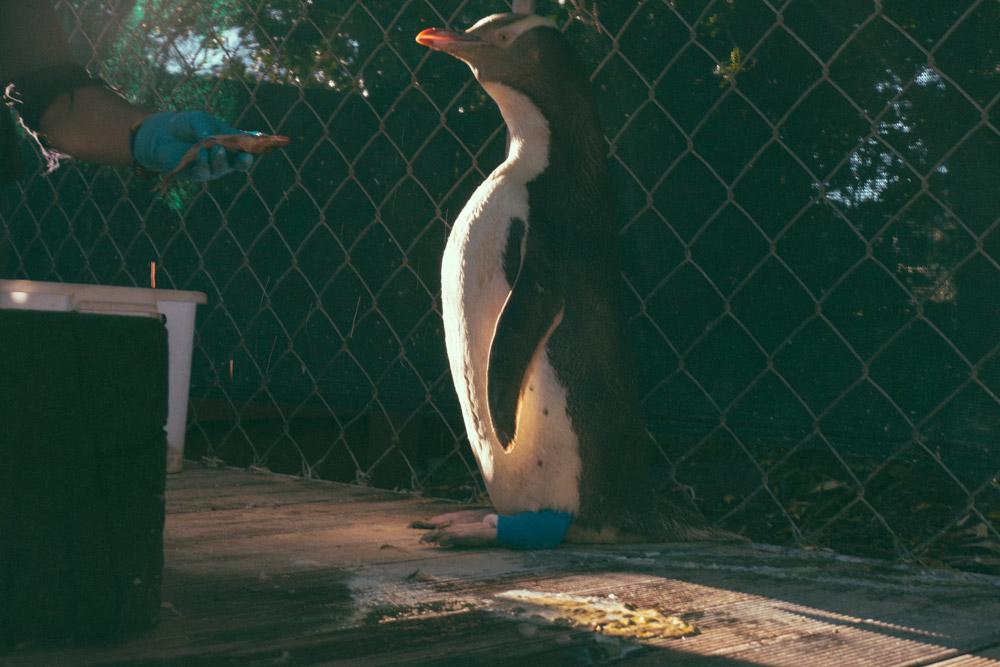 Penguin-Place-33.jpg