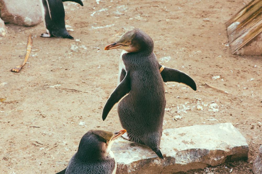 Penguin-Place-38.jpg