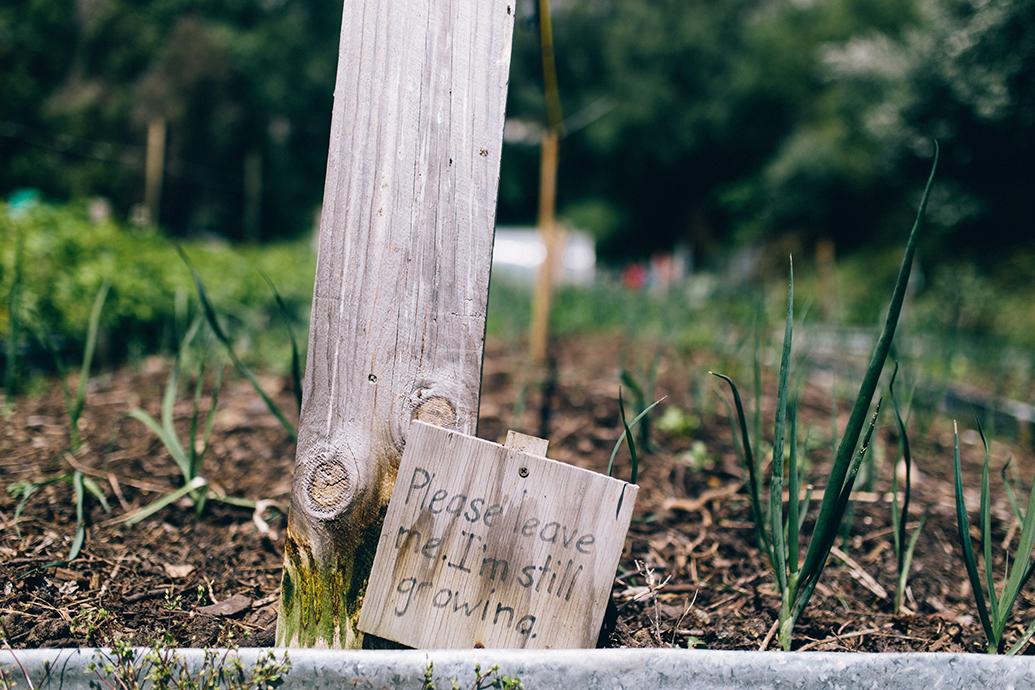 NEV-Community-Garden-1230.jpg