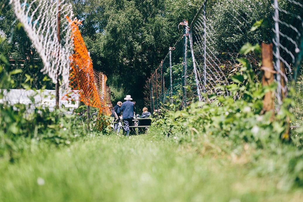 NEV-Community-Garden-1267.jpg