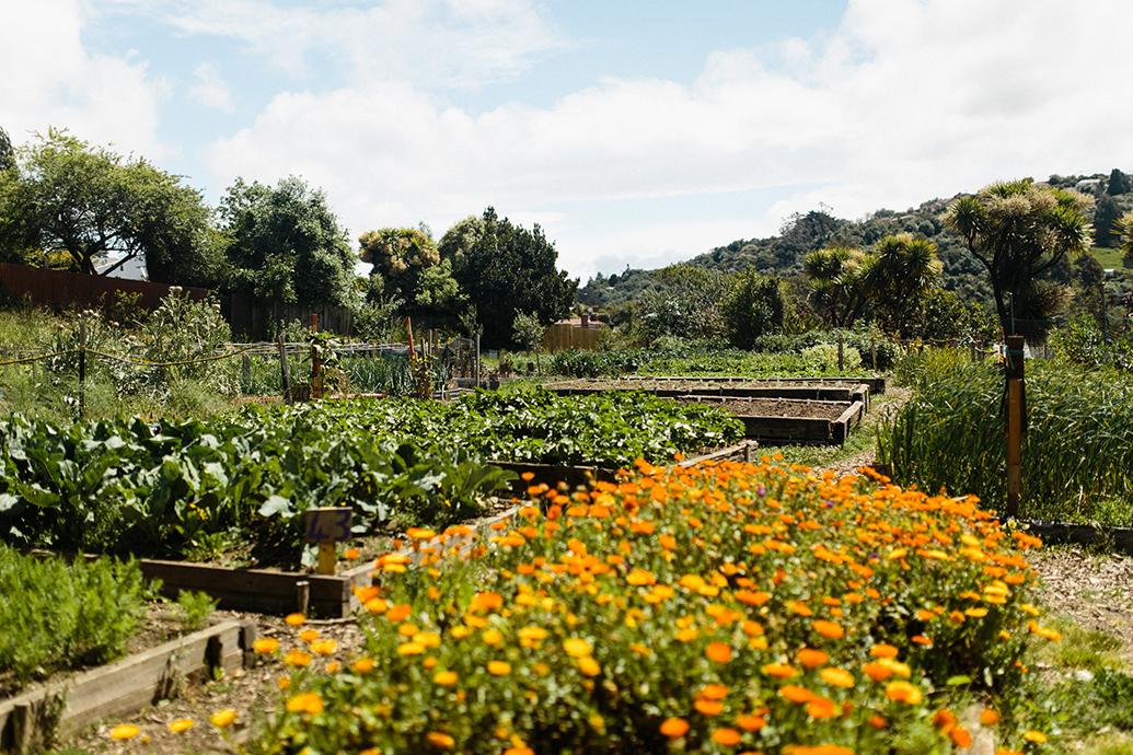 NEV-Community-Garden-1292.jpg