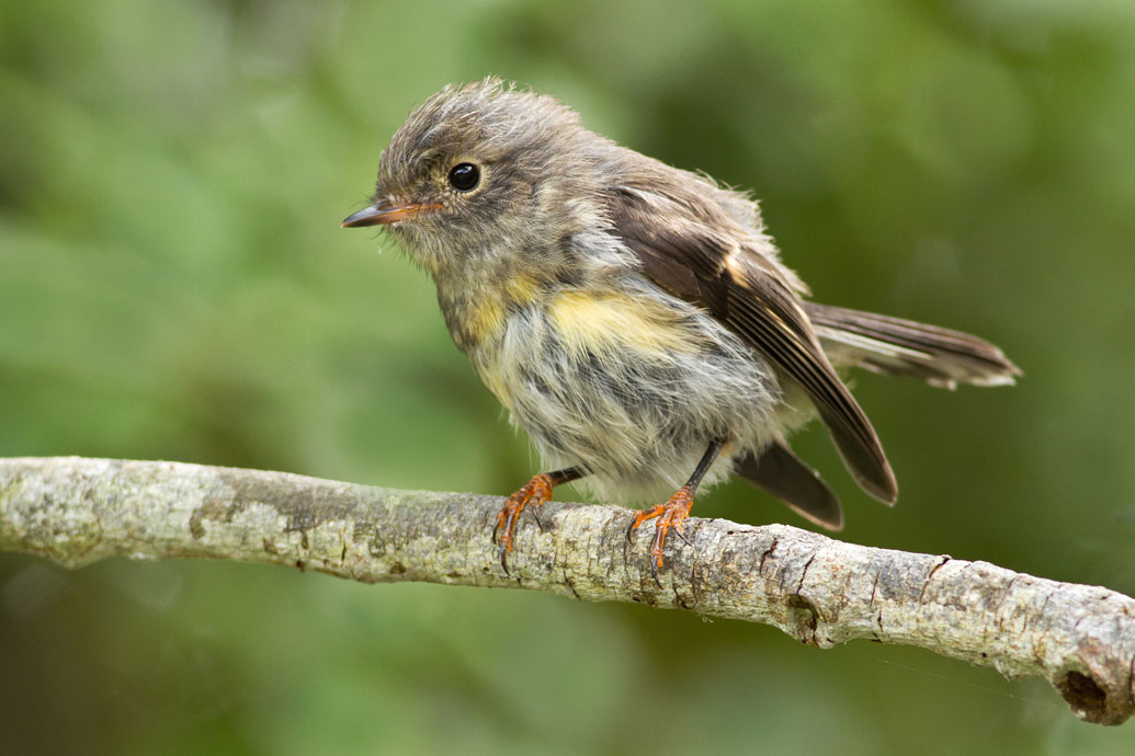 tomtit-toddlers-3.jpg
