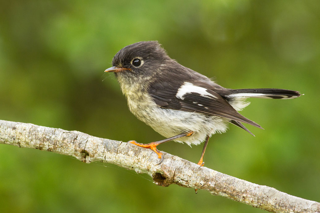 tomtit-toddlers-6.jpg