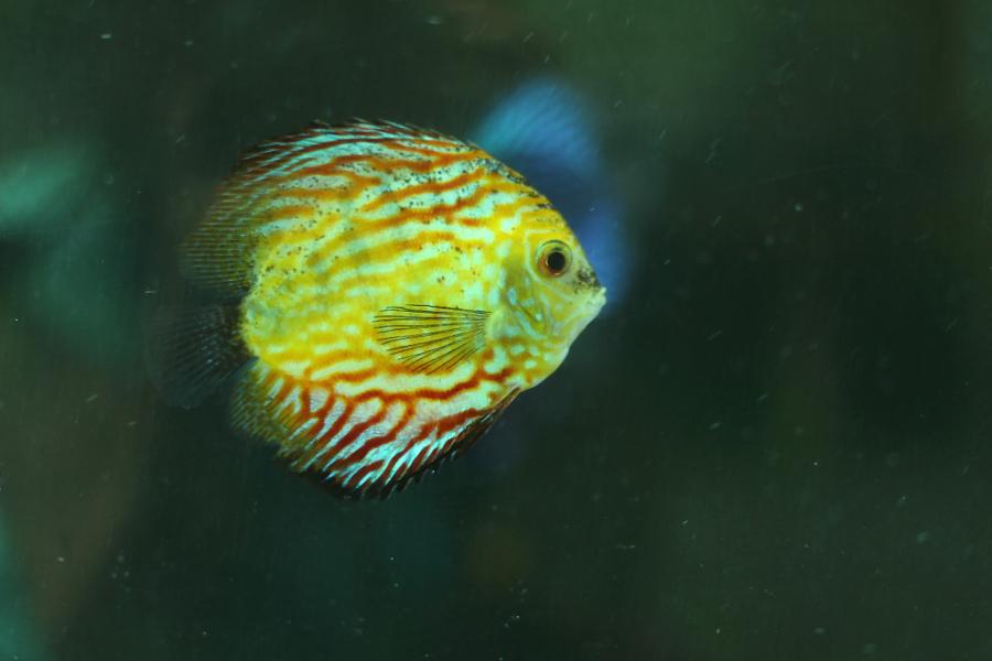 fish no.1