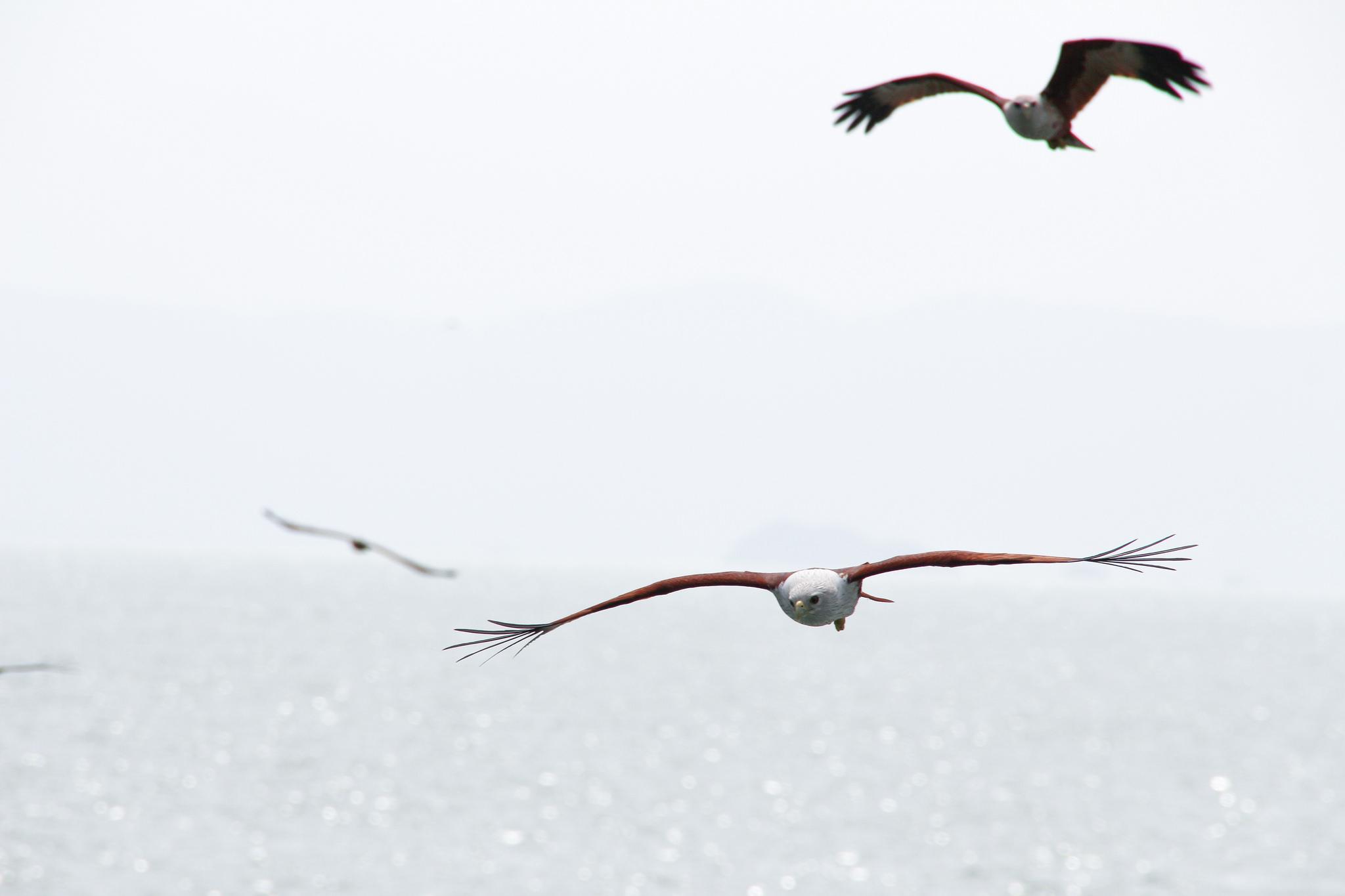 birds in Thailand