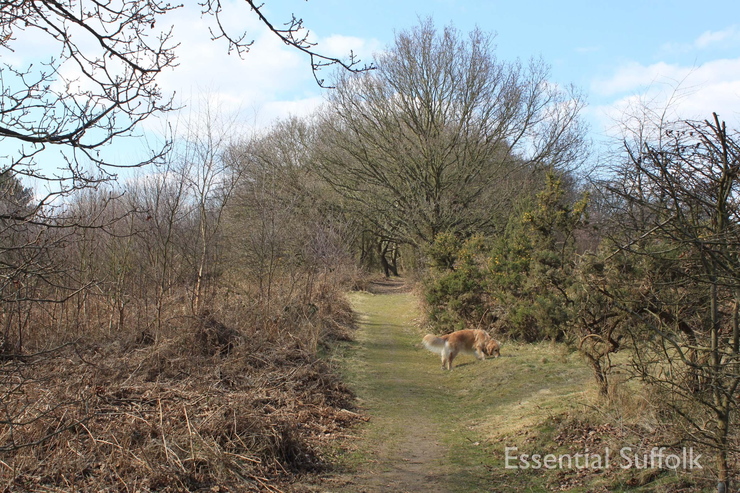 Bromeswell dog walk02.jpg