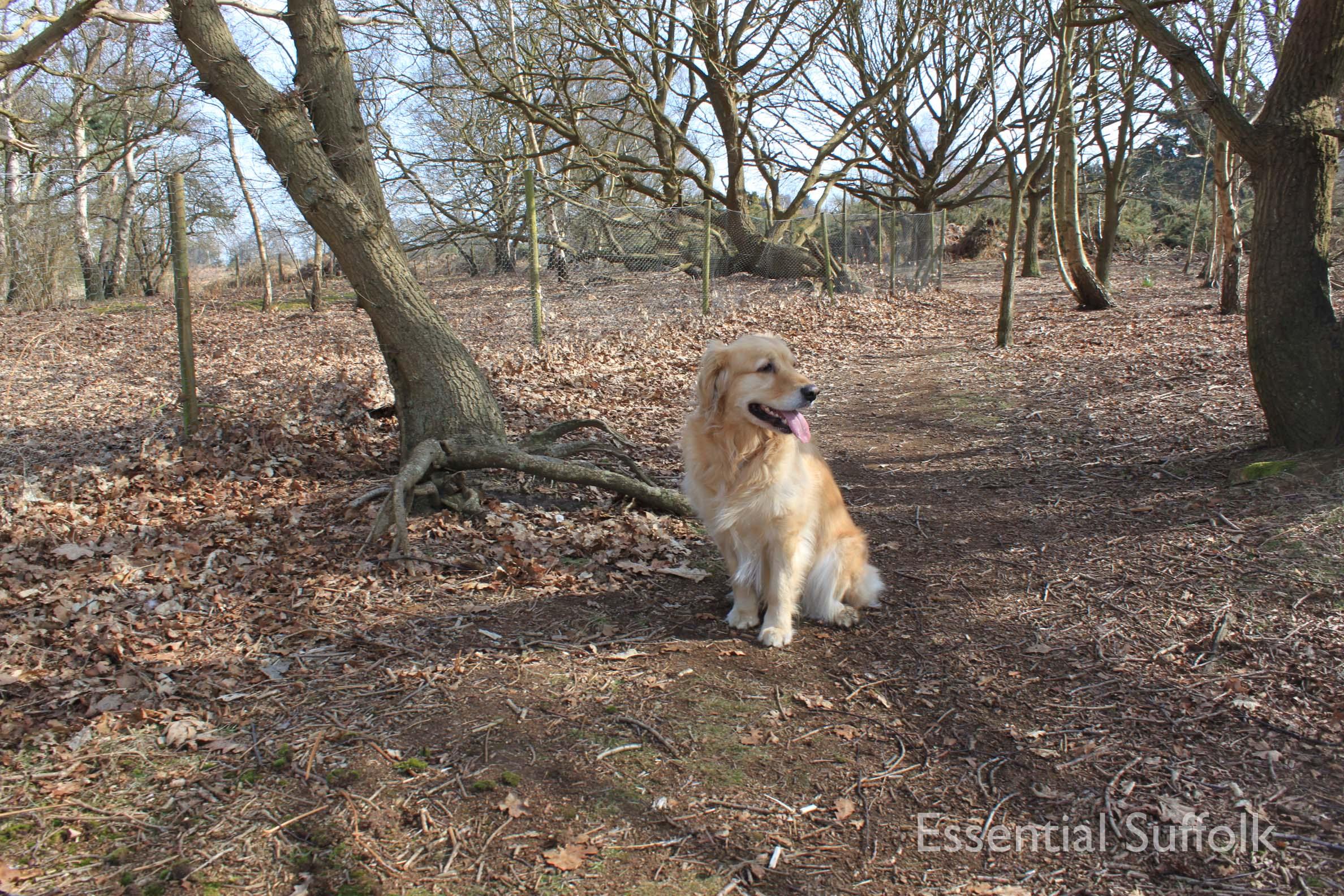 Bromeswell dog walk07.jpg