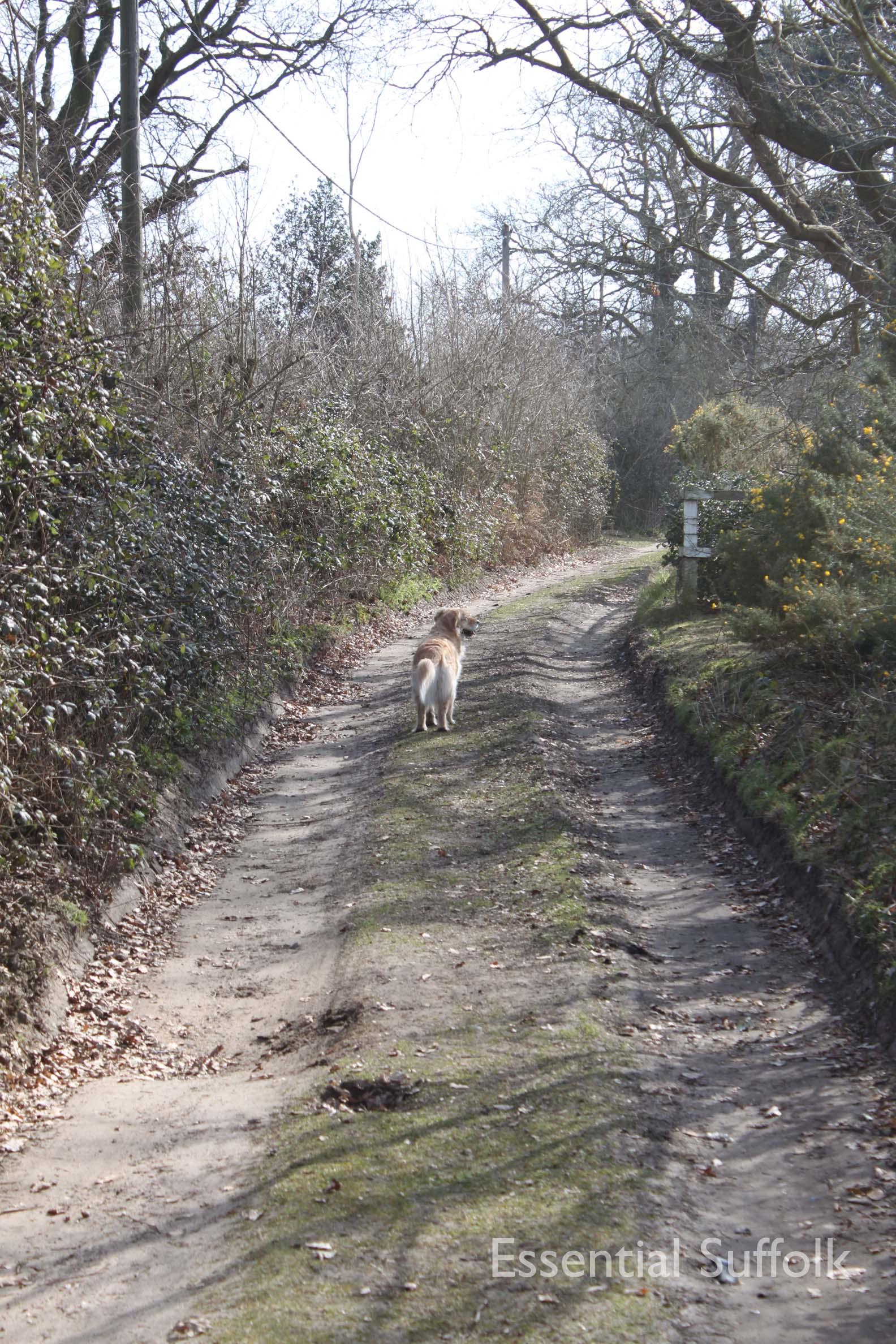 Bromeswell dog walk09.jpg