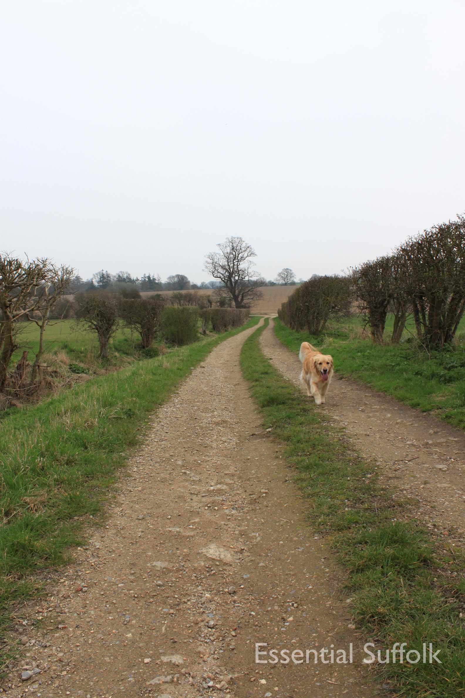 Cretingham dog walk07.jpg