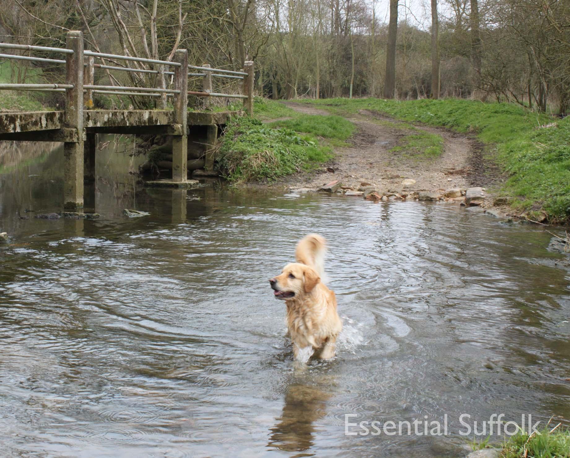 Cretingham dog walk10.jpg
