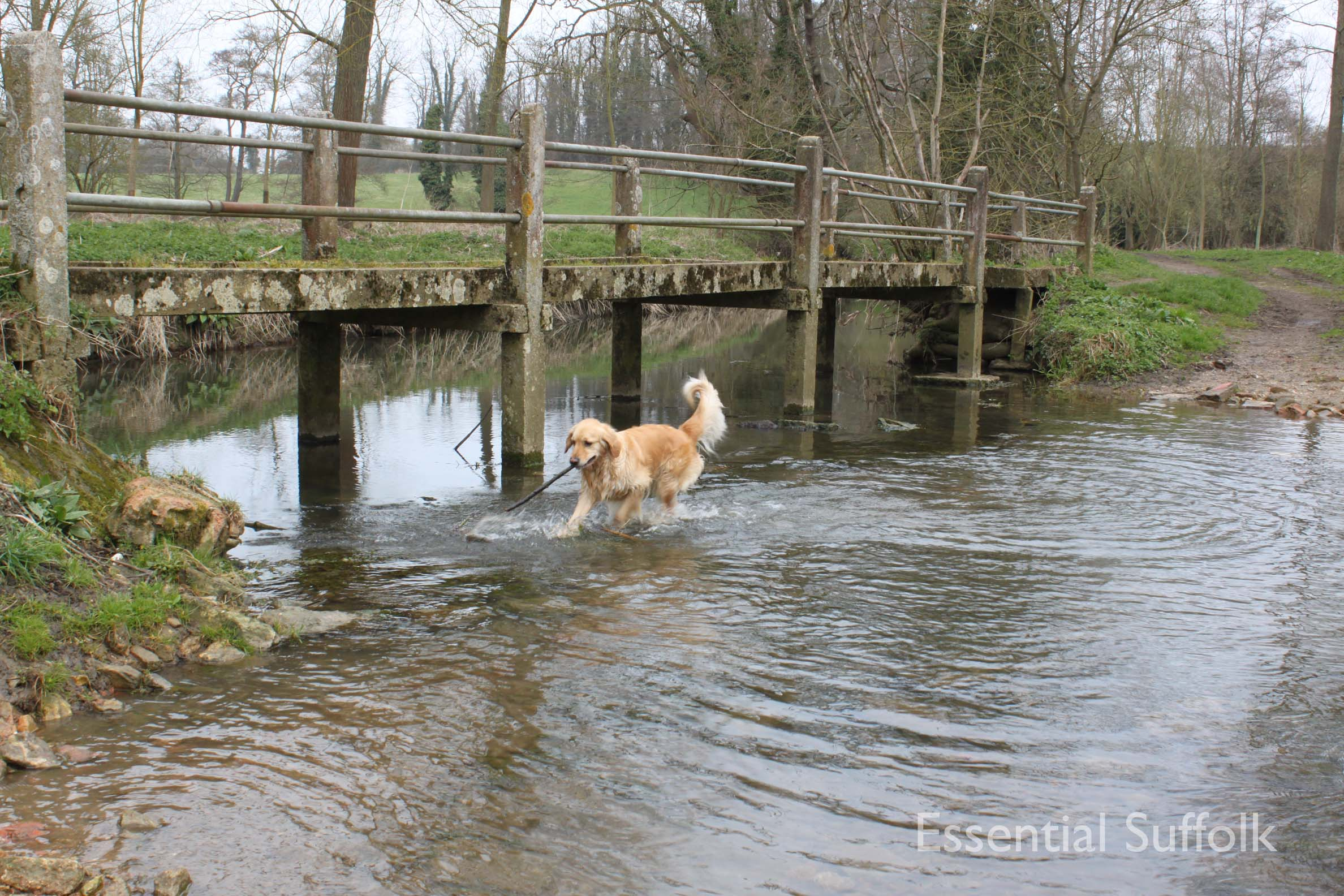 Cretingham dog walk11.jpg