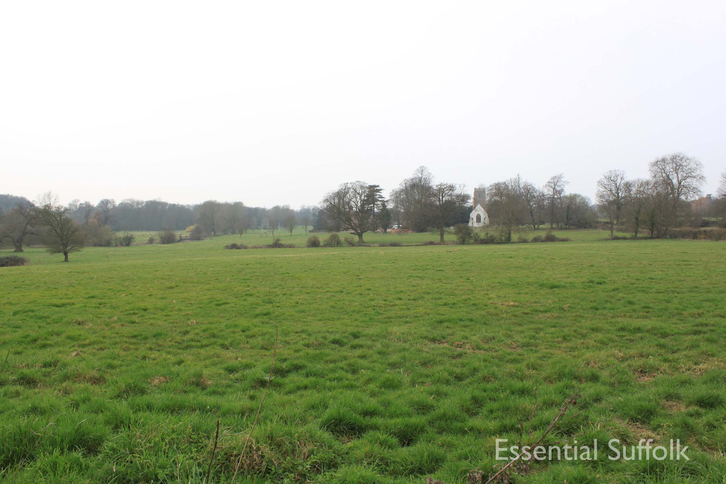 Cretingham dog walk13.jpg