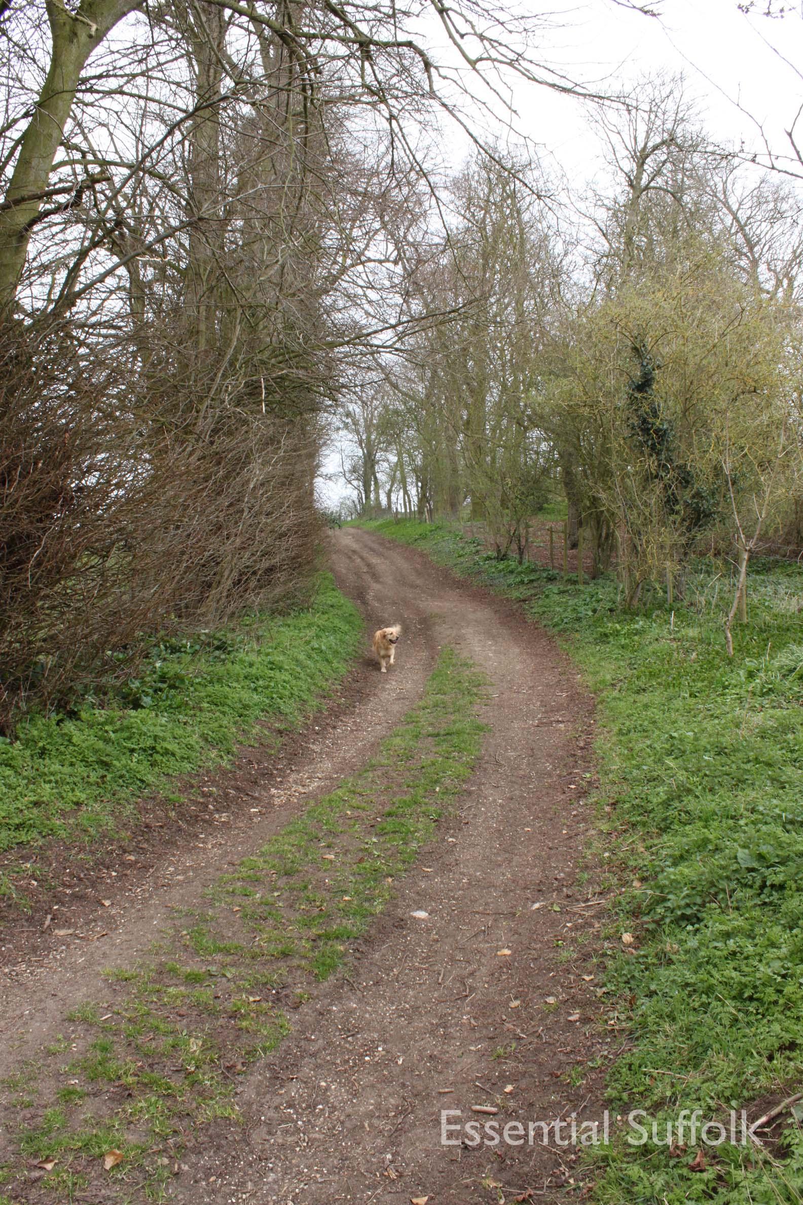 Cretingham dog walk12.jpg