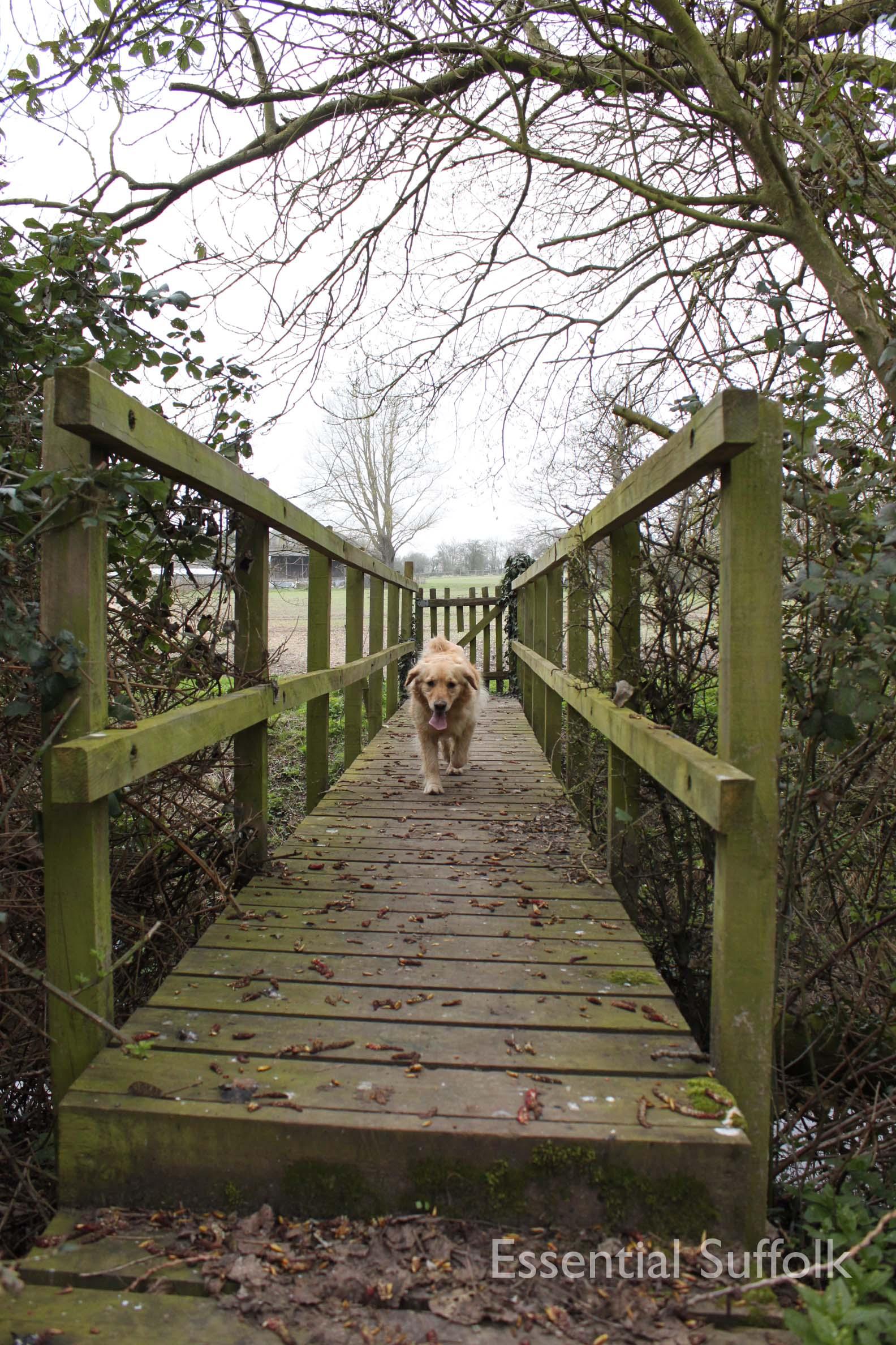 Cretingham dog walk15.jpg